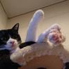 今日の黒猫モモ&白黒猫ナナの動画ー776