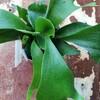 未知の植物コウモリランに着手!手探りの中でもヤツはすぐ来る!