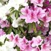 今日のお花🌺