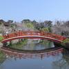 【神泉苑】桜満開!願いが叶う法成橋に可愛いアヒルさんと出会い