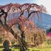 須坂弁天池(長野県須坂)