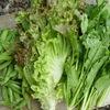 誕生日ギフト 有機野菜