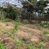 【畑】フォレストガーデン、再挑戦! 〜食べられる森に向けて〜