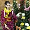 「菊花フェスティバルin白山」でキクを撮る
