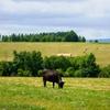 そもそも牛とは。後編。