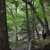 森で休むこと 深山の風景