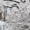 振り積む雪、草木眠らせ