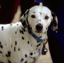 THREE DOGS blog