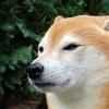 【ダウの犬】ダウの犬戦略から学ぶこと。