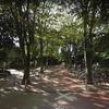 中野区の平和の森公園のケヤキは守られたか? 正面入口のケヤキ並木の現在を追う