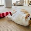 テレワーク中のお昼休憩は、愛猫と遊んでリフレッシュ!
