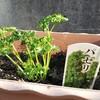 【充実野菜】野菜を育てると、毎日が充実する理由