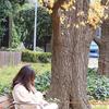 想えばアレからまだ1年にもならない… /    初冬の神宮外苑から新国立競技場へと歩いた日のこと
