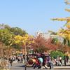紅葉の大阪城公園