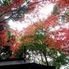 たくさん紅葉