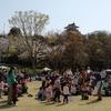 浜松城公園で保護した猫!飼い主を募集