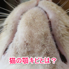 猫の顎ニキビの原因は体質?治し方や病院はどうする?