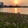 大井ふ頭中央海浜公園の夕やけなぎさ。