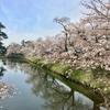 春の散歩 最後は桜