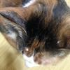 猫に腫瘍が!韓国の動物病院で手術しました。前編