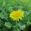 10月11日 花を撮ってきた