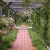 イコロの森の花園