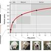 【研究】犬の年齢は7倍ではない 最新の犬年齢計算法