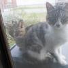 ノラ母猫の住環境について考える。