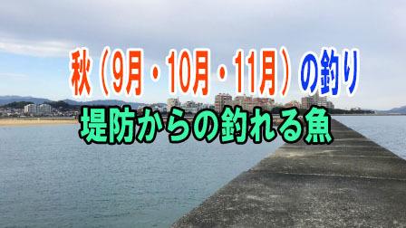 秋(9月・10月・11月)の釣り 堤防からの釣れる魚