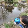 池の金魚 鳥対策