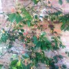 植物の近況