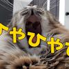 猫動画! え?これ無料で使えるの? 動画編集ソフト「EaseUS Video Editor」を使って動画編集してみる!
