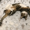 P11【保護猫日記】奇跡はおきなかった・・・