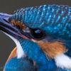 🦜野鳥捜索隊【130】奈良公園~ならまち。アイキャッチを入れてカワセミを撮れ!(2/20)