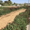 秋冬野菜専用エリアを整理しました