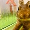 ウサギがいたずらしても叱らないようになった飼い主