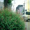 街道の花 / Canon demi