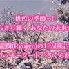 桃色の季節っ!! きらきら輝く あなたの未来☆☆ 神秘家 龍樹(Ryujyu)の12星座占い3月号