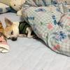 ユニクロのヒートテック毛布、本当買ってよかった。犬と一緒に寝てる人にもお勧めしたい。