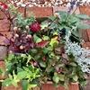 花壇と寄せ植え用の花を購入