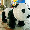 美樂華百樂園の可愛動物車パンダ