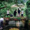 醒ヶ井に梅花藻を見に行った2017(滋賀)