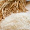 お米を粗末にすると目がつぶれるという迷信の意図について歴史好きが考えてみた!