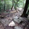 上野道から山寺尾根へのハイキング(その2)山寺尾根