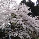 taro-jiro-mama's blog