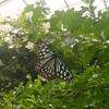 蝶が舞う!多摩動物公園の昆虫園が桃源郷のようだった【東京・日野市】