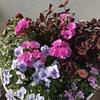 冬~春の寄せ植えのお手入れ(つづき)