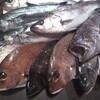 本日の漁港直送の魚たち!
