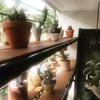 多肉植物、サボテンの陳列棚の増床DIY