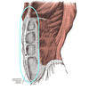 テニスの解剖学④~腹筋群~